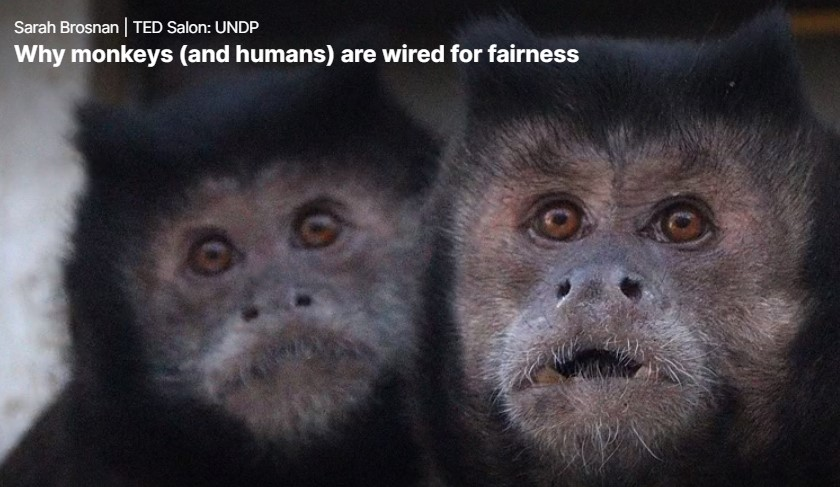 Sarah Brosnan: Why monkeys are wired for fairness